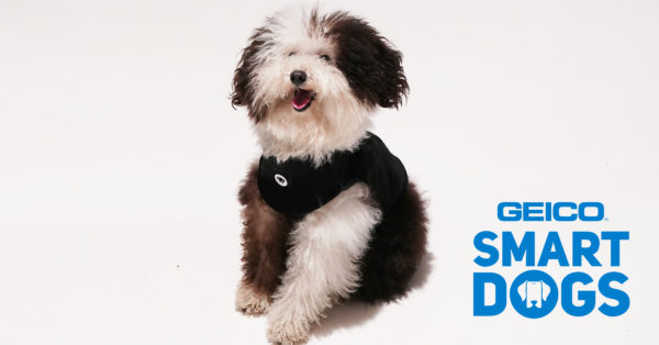 Dogs React To GEICO Smartdogs Commercial | GEICO Living