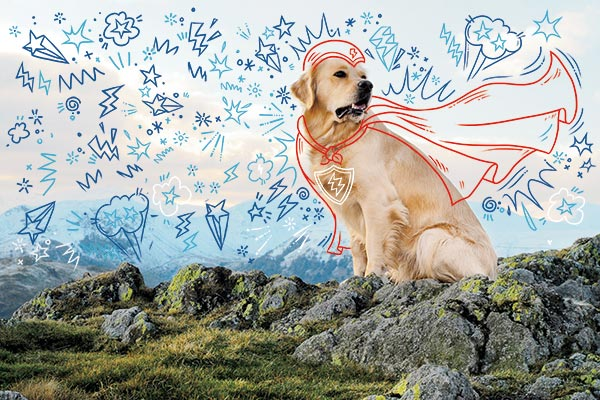 Golden Retriever super hero