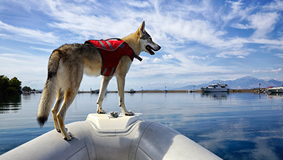 How To Boat Safely With Your Dog