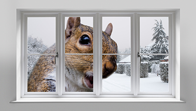 How To Pest-Proof Your Home This Winter