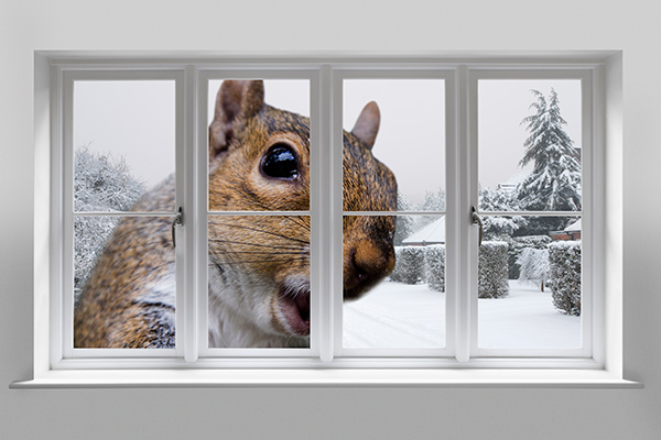 Giant squirrel looking through window