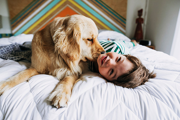 golden retriever and boy