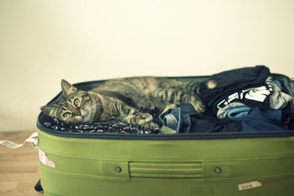 Cat laying inside suitcase full of clothes.