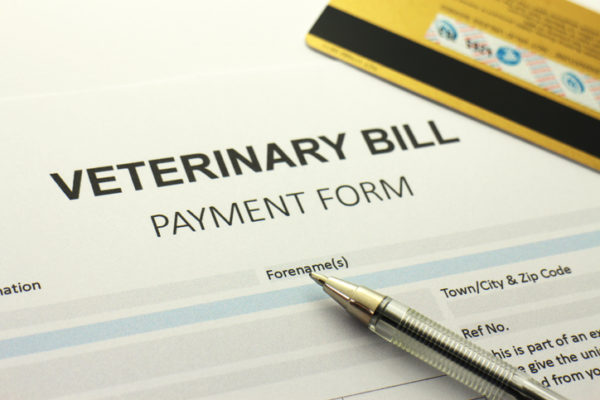 A blank vet bill payment form, generic credit/debit card in shot.