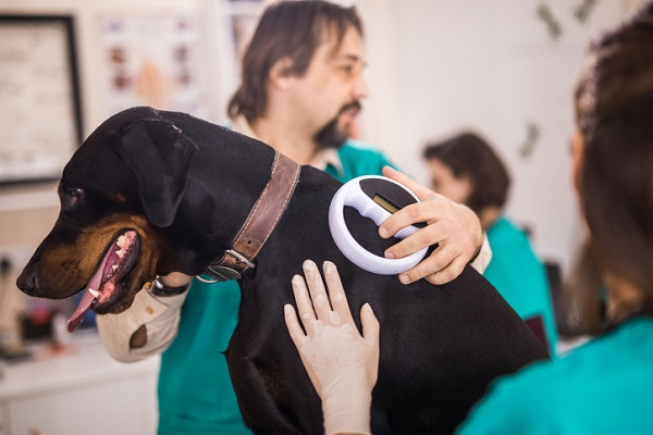 Veterinarians scanning Doberman's chip at animal hospital.