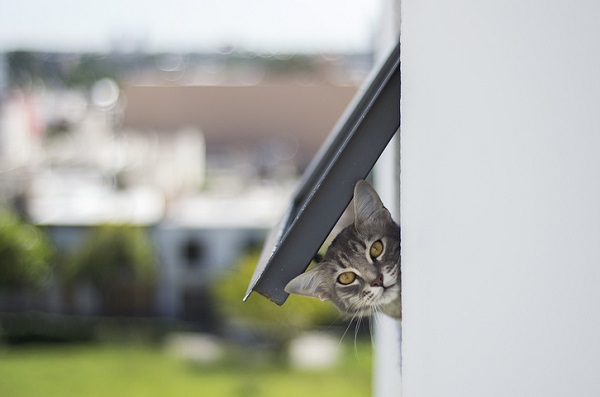 Cat looking through cat flap