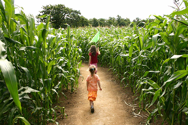 Little girls walking through corn maze