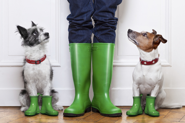 Dogs in rainboots