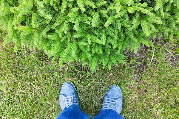 Feet next to pine tree