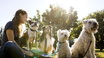 How To Keep Pets Safe And Healthy This Summer