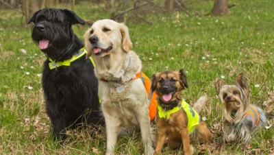 Group of dogs are wearing a reflective vest.