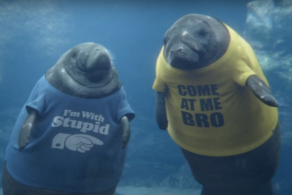 manatees in t-shirts