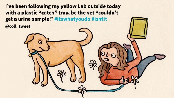 Dog urine sample illustrated tweet
