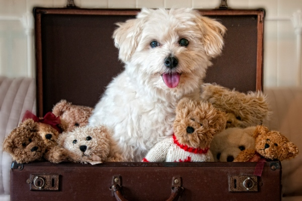 Dog and teddy bears sitting in suitcase