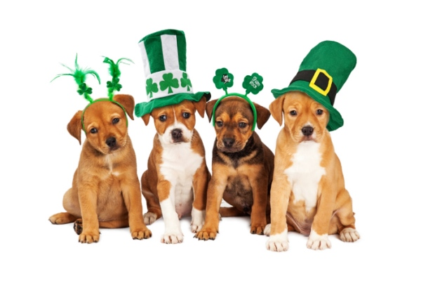 puppy dogs dressed up for st. patrick's day