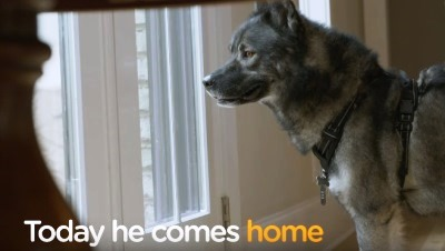 Welcome Home: Heartwarming Military Pet Reunions