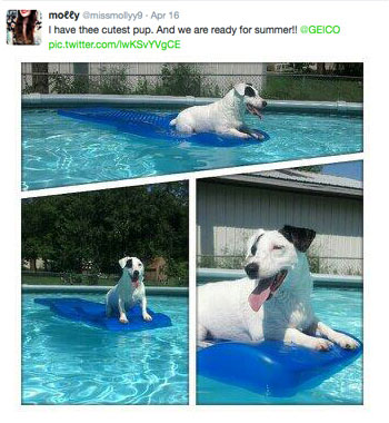 White dog in a pool on a blue raft #geicocutepet contest