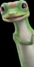 Gecko asomándose