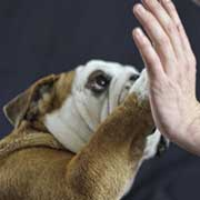 dog giving person a high five