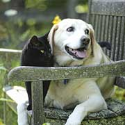 dog and cat sitting on bench